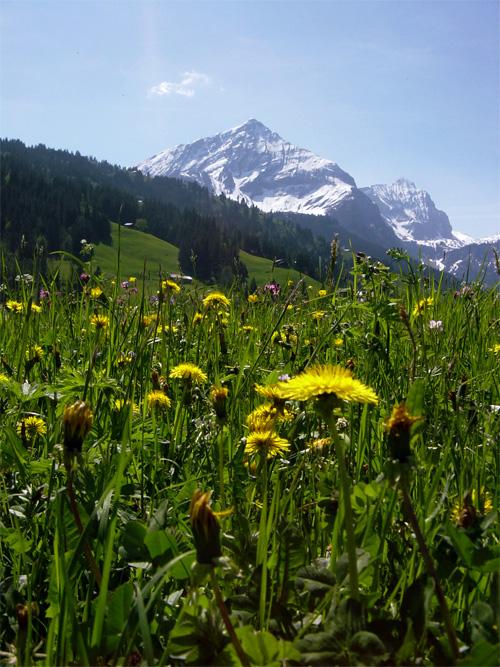 Gstaad 8 berge for Wellnesshotel deutschland designhotels